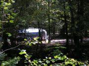 Natural Habitat(Elkmont)