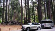 Calaveras Big Tree Sp