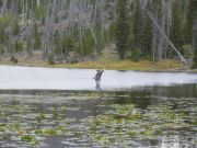 Nanc Flyfishing For Grayling, Yellowstone 2013