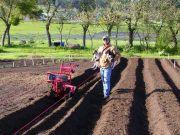Lily Dj Ruby Prepping Garlic Ground