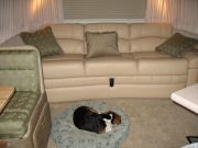 Bailey Snoozing In Living Room