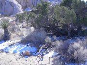 Snow under bushes in Desert
