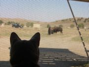 Arzu And The Bison
