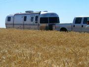 Wheat Fields Of Eastern Wa