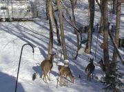 Airstream Admiring Deer
