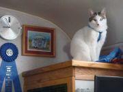 My Cat Zoe On The Wine Rack I Added