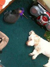 Lucy And Smokey- Tired Campers