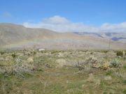 Agua Caliente March 2011
