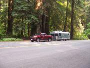 Redwoods Nat Park