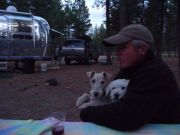 Three Tired Dogs - Jemez Falls, New Mexico, May 2010