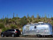 Seguaros in Arizona