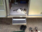 Guardcat