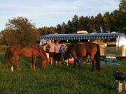 Horse Show - Monroe Wa Evergreen Classic