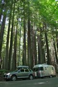 Bambi Redwoods