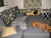 Formica And Sofa Sleeper