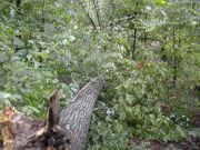 Uwharrie National Forest--Arrowhead CG, NC