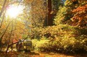 Silver In Gold: Yosemite Fall 2013