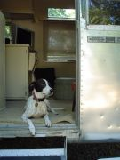 Lucy the Airstream dog