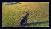 Img 20150726 081606-effects