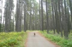 Cypress_Hills_-_66.jpg