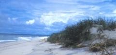 ASIS_beach2.jpg