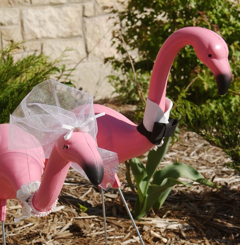 Click image for larger version  Name:flamingo wedding.jpg Views:51 Size:803.7 KB ID:104115