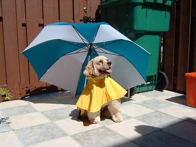 Click image for larger version  Name:dogumbrella.jpg Views:65 Size:49.3 KB ID:107325