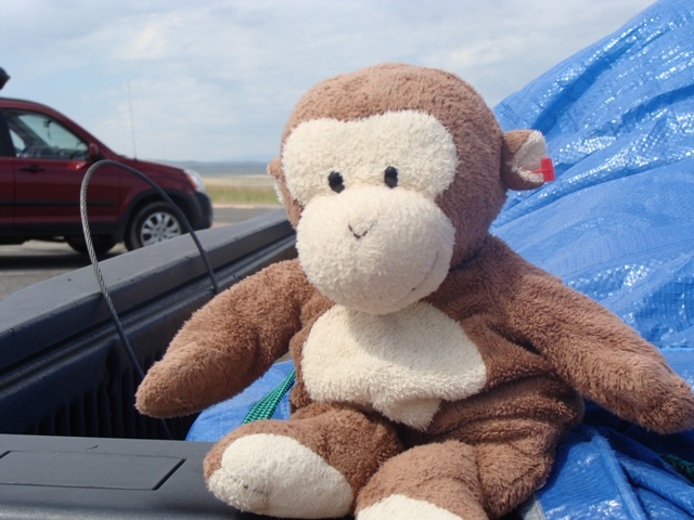 Click image for larger version  Name:monkey.jpg Views:54 Size:130.7 KB ID:107636