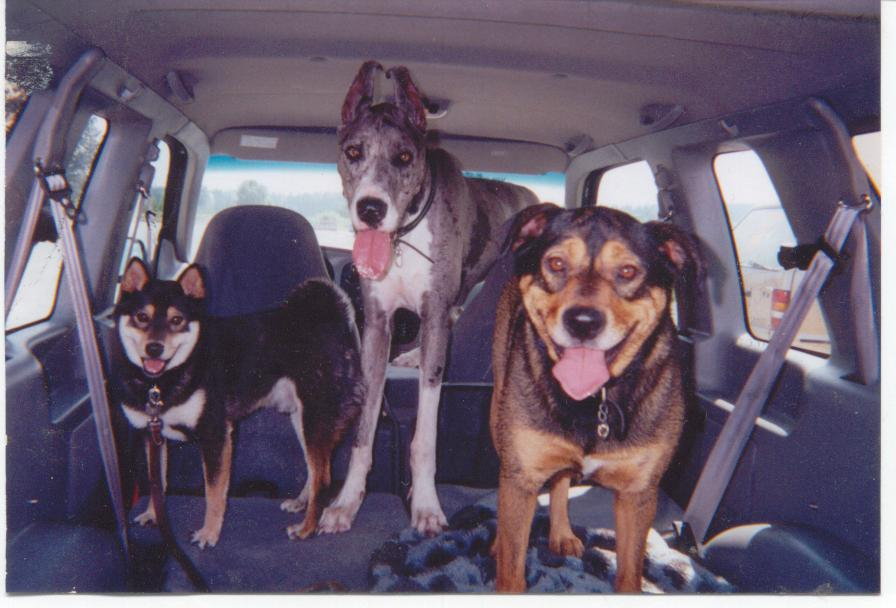 Click image for larger version  Name:My 3 Poopies.jpg Views:59 Size:71.3 KB ID:107722