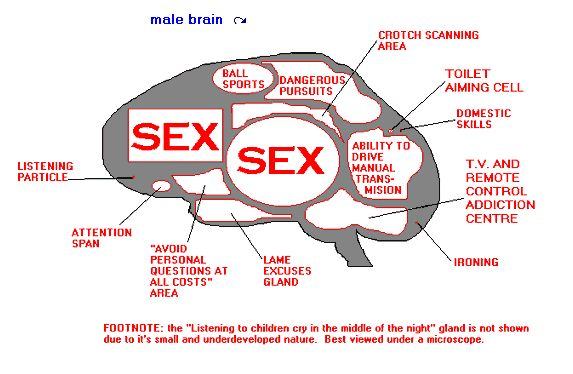Click image for larger version  Name:male brain.jpg Views:106 Size:42.2 KB ID:11134