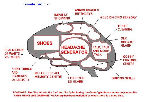 Click image for larger version  Name:female brain.jpg Views:99 Size:46.6 KB ID:11135