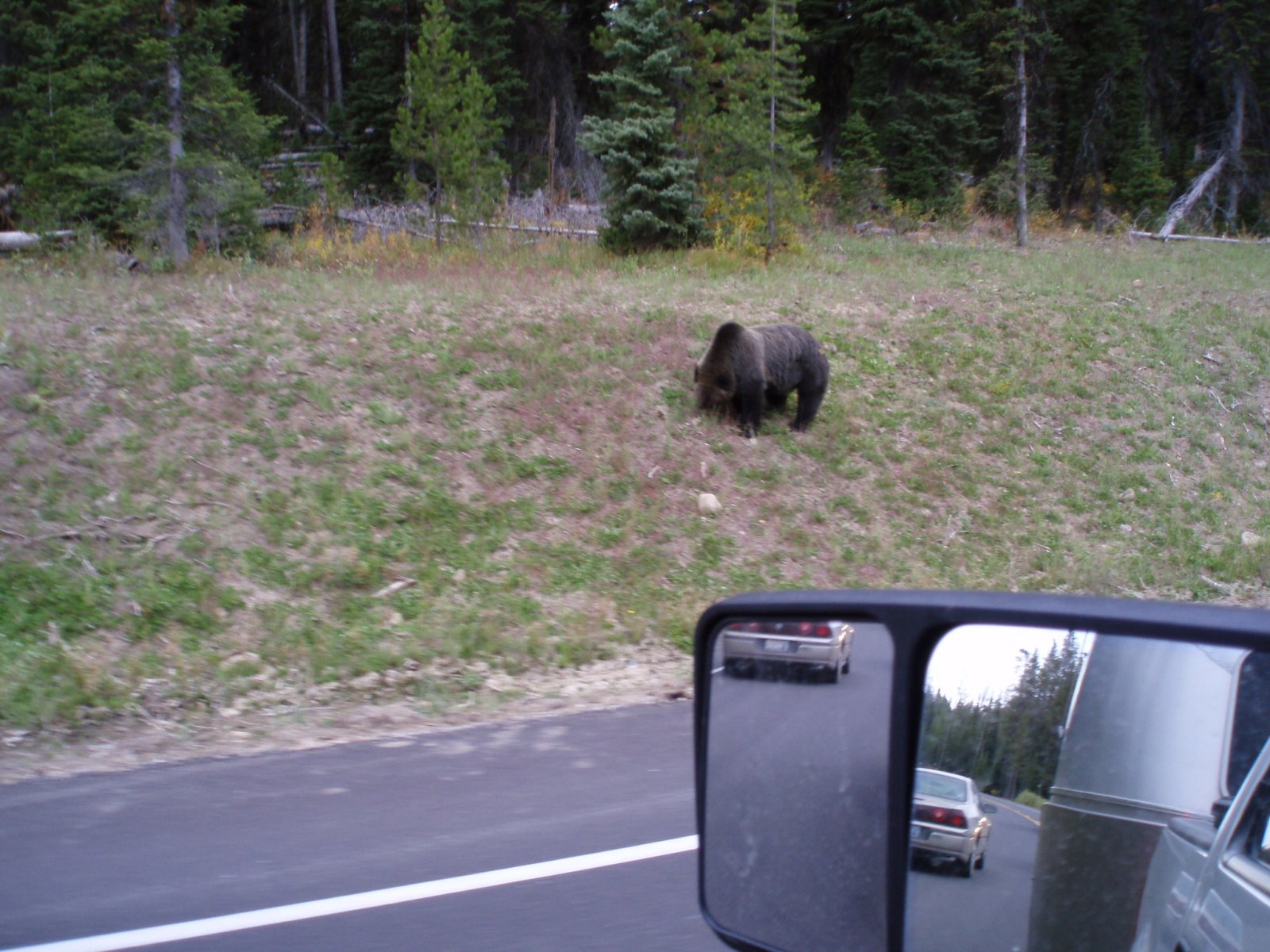 Click image for larger version  Name:Yellowstone and Rocky Mountain National Parks 2010 023.jpg Views:82 Size:312.7 KB ID:112341