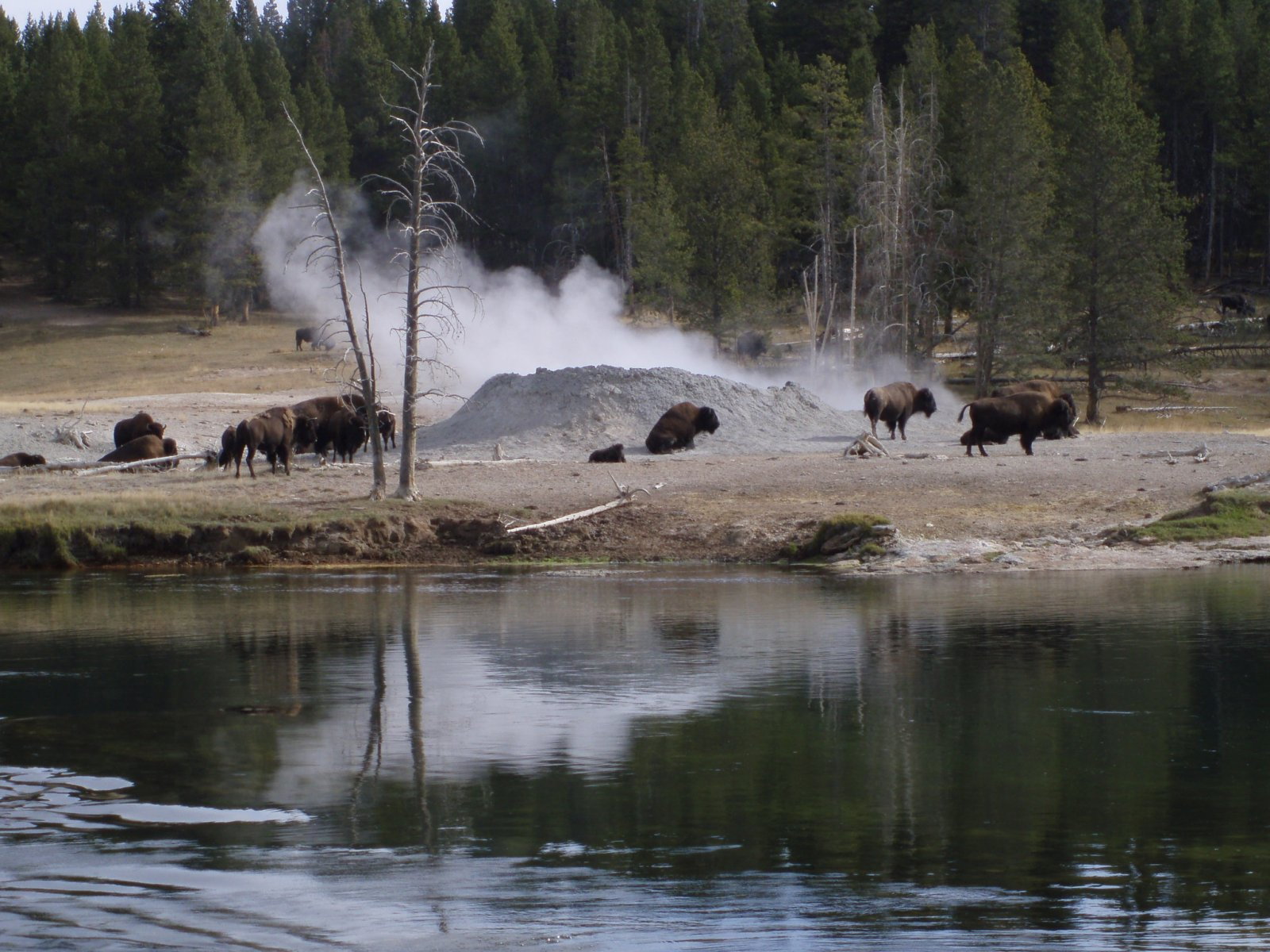 Click image for larger version  Name:Yellowstone and Rocky Mountain National Parks 2010 067.jpg Views:75 Size:323.4 KB ID:112342