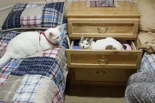 Click image for larger version  Name:CatsOnTwins.jpg Views:308 Size:55.3 KB ID:114161