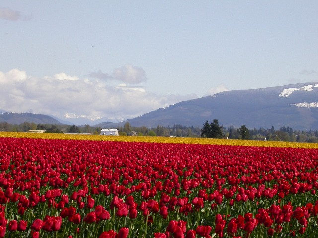 Click image for larger version  Name:skagit3small.JPG Views:66 Size:96.4 KB ID:11454