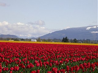 Click image for larger version  Name:skagit3small.JPG Views:67 Size:96.4 KB ID:11454