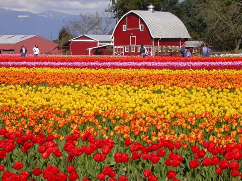 Click image for larger version  Name:skagit1small.JPG Views:81 Size:77.3 KB ID:11455