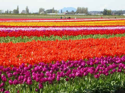 Click image for larger version  Name:skagit2small.JPG Views:65 Size:96.6 KB ID:11456