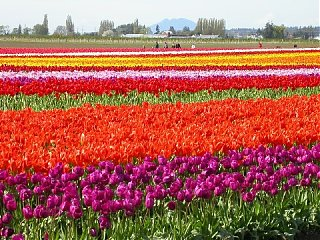 Click image for larger version  Name:skagit2small.JPG Views:69 Size:96.6 KB ID:11456