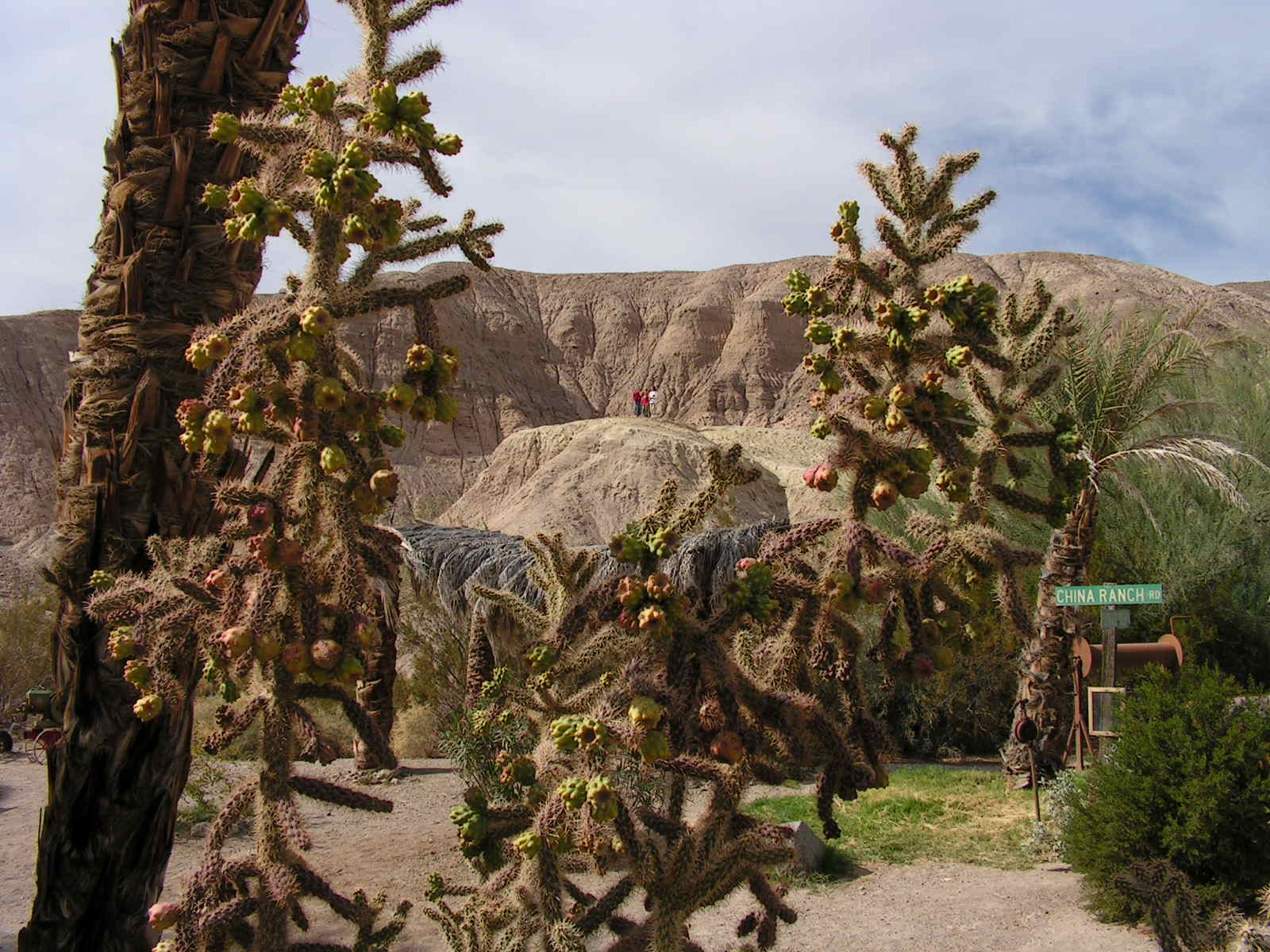Click image for larger version  Name:Tocopah & China Ranch Date Farm 018.jpg Views:55 Size:227.5 KB ID:116005