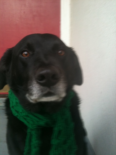 Click image for larger version  Name:Raymond With His Green Scarf 121910.JPG Views:94 Size:85.1 KB ID:117450