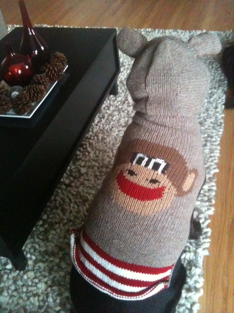 Click image for larger version  Name:Raymond With His Monkey Sweater Rear View 121910.JPG Views:95 Size:164.6 KB ID:117452