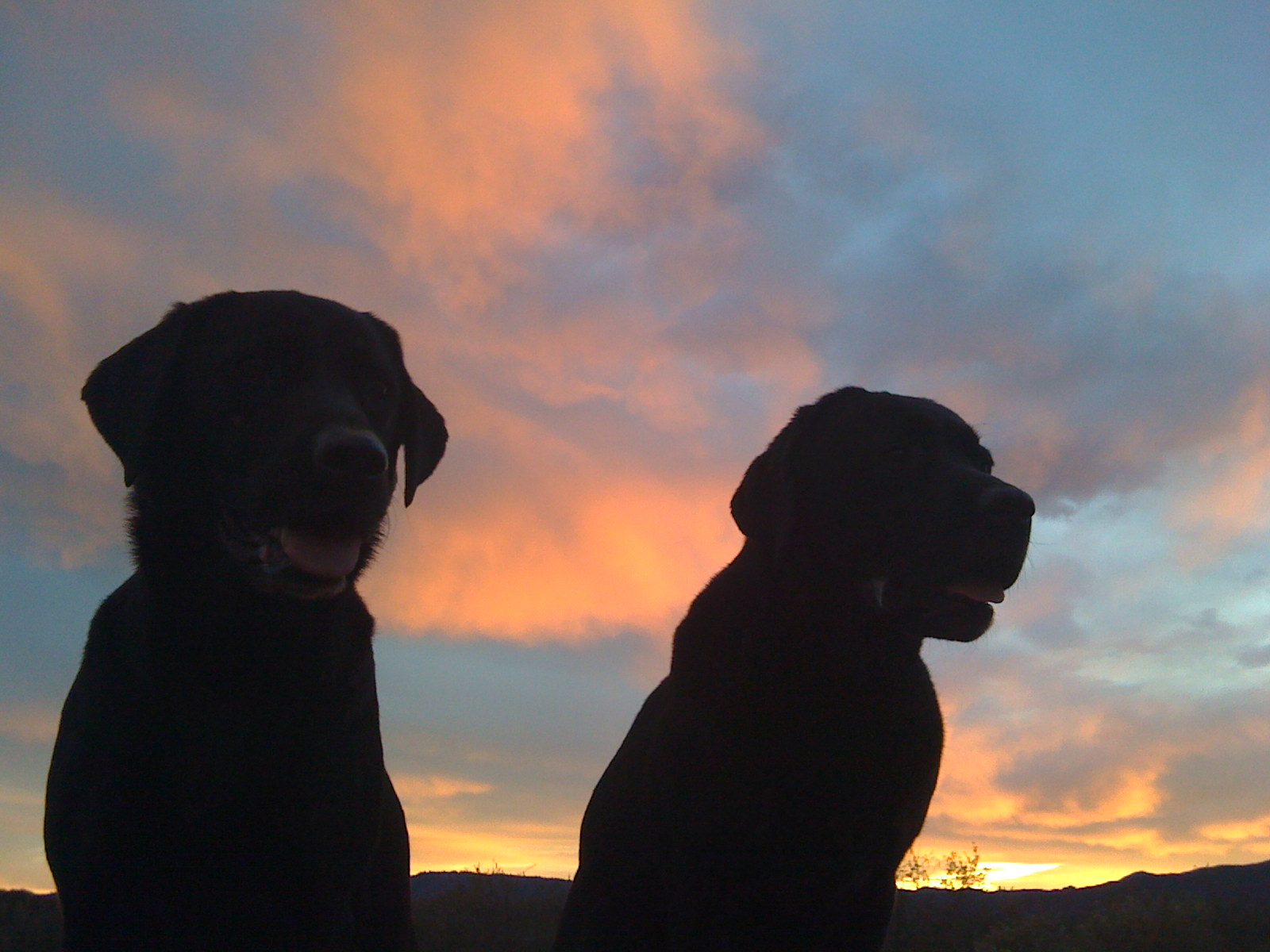 Click image for larger version  Name:Sunset Dogs.jpg Views:94 Size:261.9 KB ID:117472