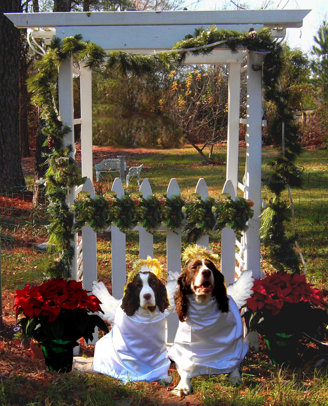 Click image for larger version  Name:Christmas_Angels4[1].jpg Views:67 Size:634.1 KB ID:117753