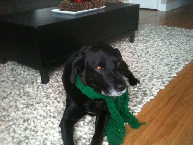 Click image for larger version  Name:Raymond Hanging Out With His Green Scarf 121910.JPG Views:55 Size:126.1 KB ID:117817