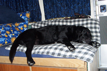 Click image for larger version  Name:Taz on Bed.jpg Views:83 Size:90.6 KB ID:11978