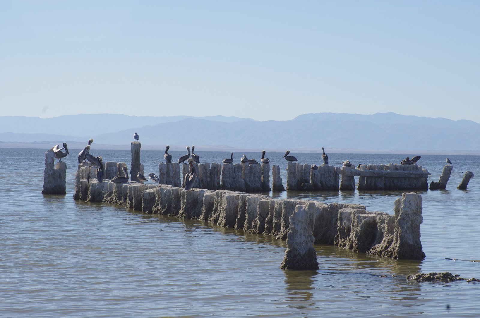 Click image for larger version  Name:Bombay Pilings.jpg Views:85 Size:232.2 KB ID:120276