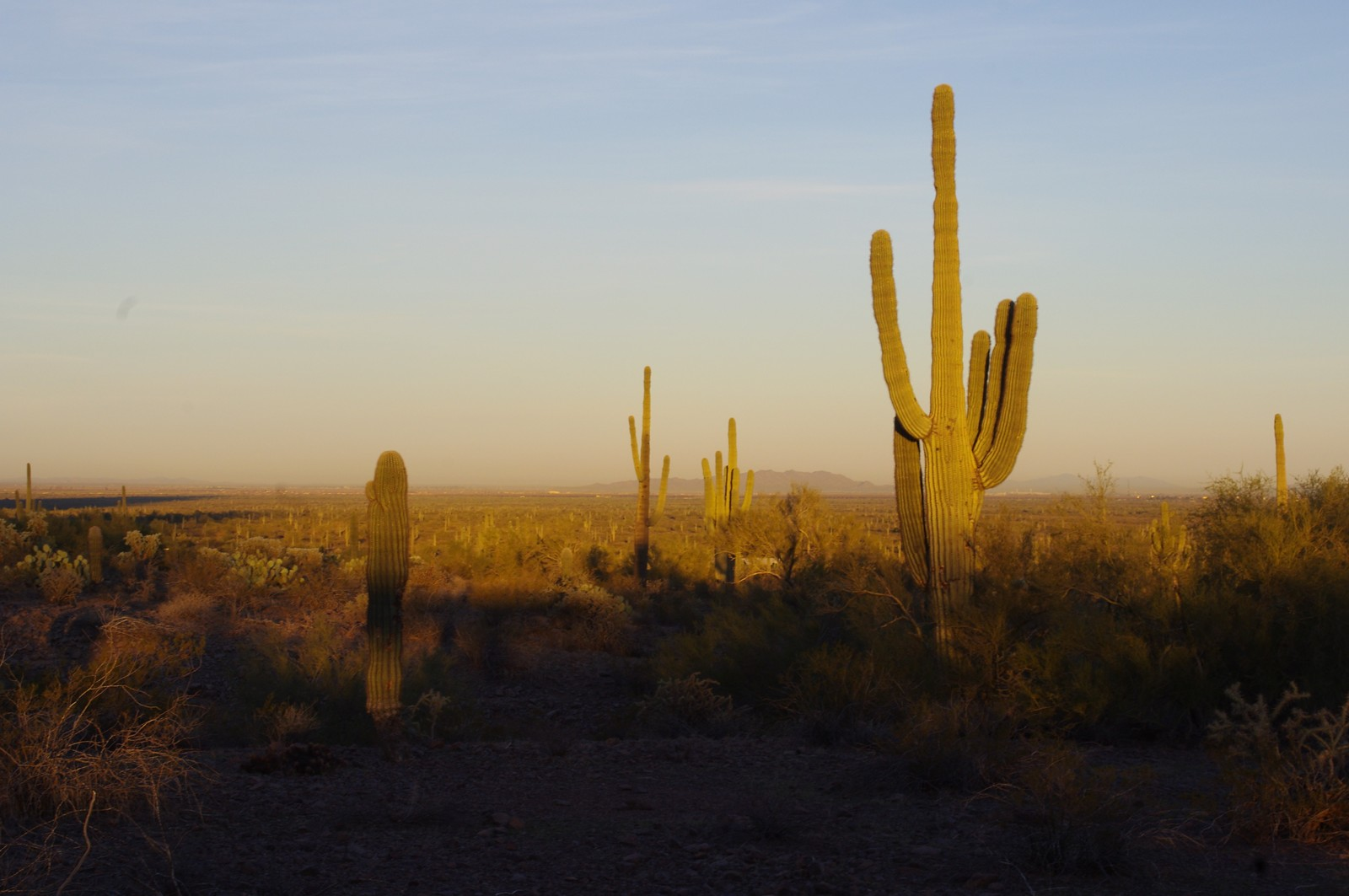 Click image for larger version  Name:Picacho-Cactus.jpg Views:78 Size:211.8 KB ID:121585
