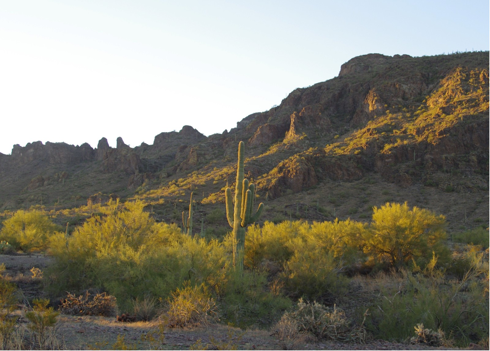 Click image for larger version  Name:Picacho-East.jpg Views:68 Size:370.2 KB ID:121586