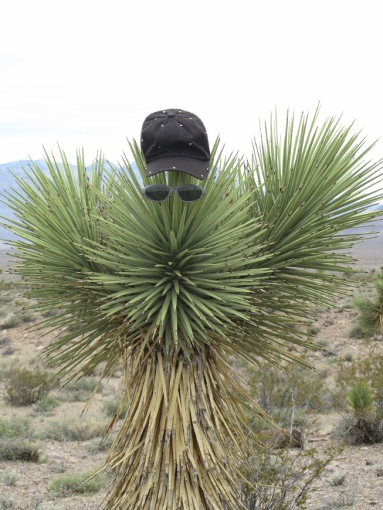 Click image for larger version  Name:10.Yucca Guy.JPG Views:97 Size:126.6 KB ID:126675